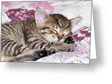 Sleeping Kitten Greeting Card