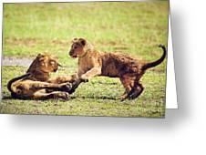 Small Lion Cubs Playing. Tanzania Greeting Card