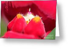 Snapdragon Named Red Chimes Greeting Card