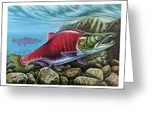 Sockeye Salmon Greeting Card