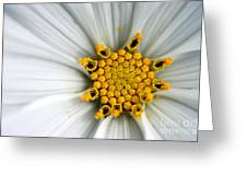 Sonata Cosmos White Greeting Card