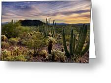 Sonoran Desert Sunset  Greeting Card