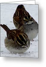 3 Sparrows Greeting Card