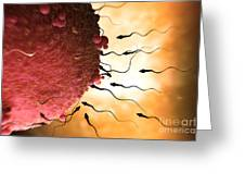 Sperm And Ovum Greeting Card