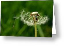 Spring Feelings Greeting Card