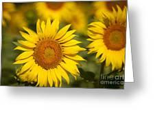 Sunflowers Greeting Card