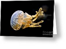 The Spotted Jelly Or Lagoon Jelly Mastigias Papua Greeting Card