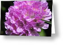 Thrift Named Joystick Lilac Greeting Card