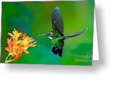 Tourmaline Sunangel Greeting Card