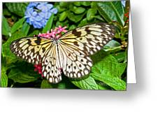 Tree Nymph Butterfly Greeting Card