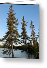 3 Trees Greeting Card