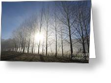 Trees On A Foggy Field Greeting Card