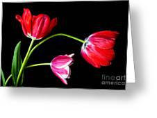 3 Tulips - 213 Greeting Card