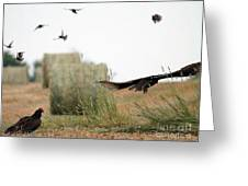 Turkey Vultures Greeting Card