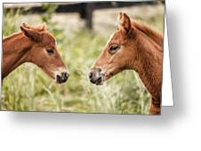Two Colts Greeting Card