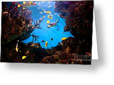 Underwater View Greeting Card