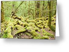 Virgin Rainforest Wilderness Of Fiordland Np Nz Greeting Card