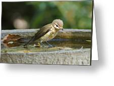 Warbling Vireo Greeting Card