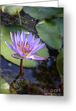 Blue Water Lily Greeting Card