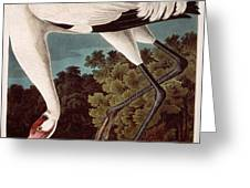 Whooping Crane Greeting Card by Celestial Images
