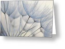 Wiesenbocksbart Greeting Card