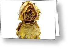 Wilted Rose Greeting Card