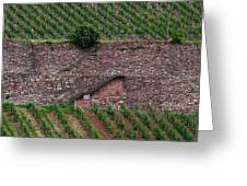 Wine Of Rhine Greeting Card