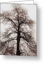 Winter Tree In Fog Greeting Card