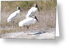 Wood Storks Greeting Card