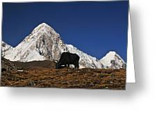 Yaks Grazing In A Himalayan Valley Greeting Card