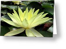 3 Yellow Lotus Greeting Card