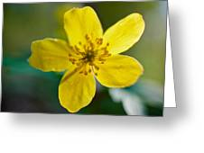 Yellow Wood Anemone Greeting Card