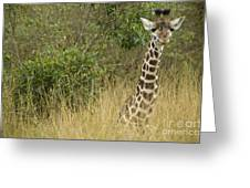 Young Giraffe In Kenya Greeting Card