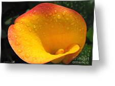 Zantedeschia Named Flame Greeting Card