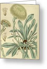 Botanical Print Or English Natural History Illustration Greeting Card