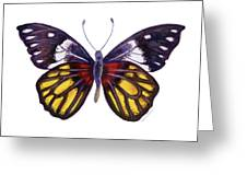 31 Delias Henningia Butterfly Greeting Card