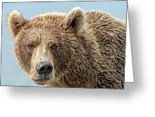 Grizzly Bears Also Called Brown Bears Greeting Card