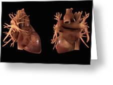 Heart Anatomy Greeting Card