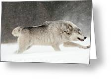 Wolf In Winter Greeting Card