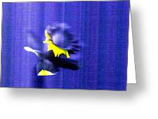 3.13 Daffodil Greeting Card