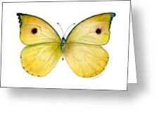 32 Dercas Lycorias Butterfly Greeting Card