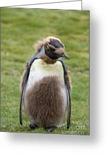 King Penguin Greeting Card