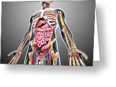 Male Anatomy Greeting Card