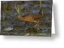 King Rail In A Wetland Greeting Card