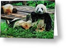 3722-panda -  Acanthus Sl Greeting Card