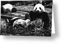 3722-panda -  Advanced Pencil Sketch Greeting Card