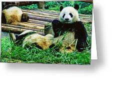 3722-panda -  Colored Photo 1 Greeting Card