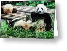 3722-panda -  Embossed Sl Greeting Card