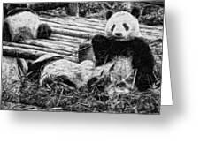 3722-panda -  Graphite Drawing 2 Sl Greeting Card