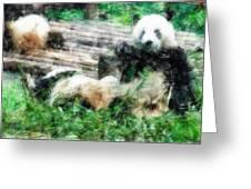 3722-panda -  Light Colored Pencils Greeting Card